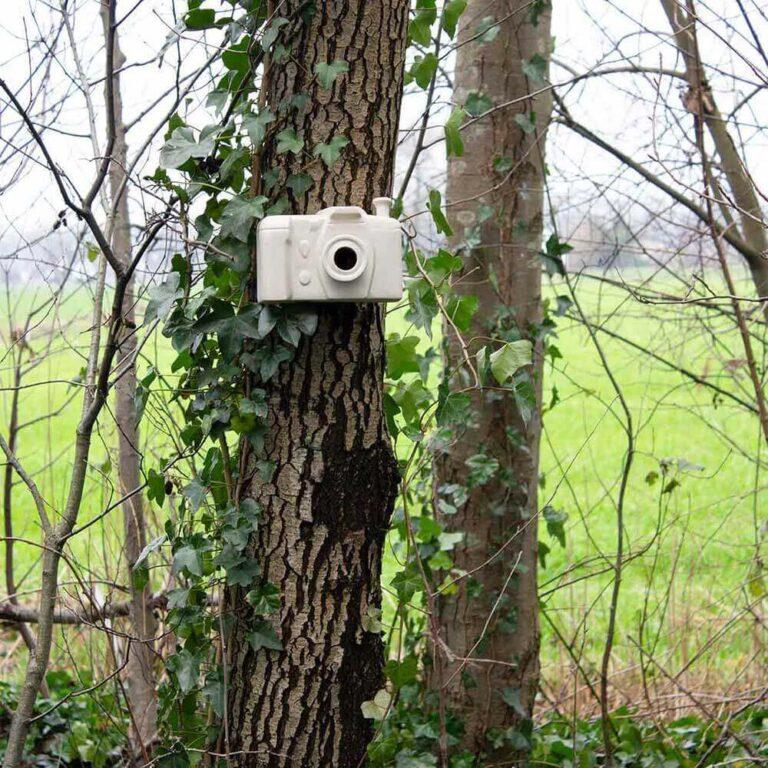 Ooit een nestkastje gezien in de vorm van een fotocamera? De vogels maakt het natuurlijk niet uit waar ze in kunnen broeden, maar voor jou is het prachtig om te zien.