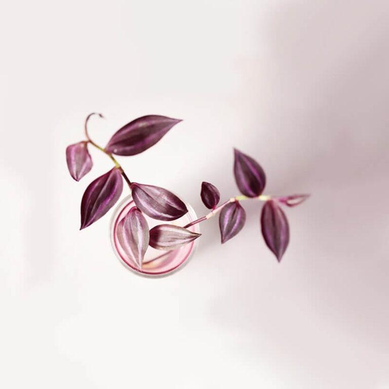 Bovenaanzicht van de Flower Tube roze. De vaas bestaat uit twee delen: een gekleurde glazen vaas, die rust in een doorzichtige cilinder van glas.