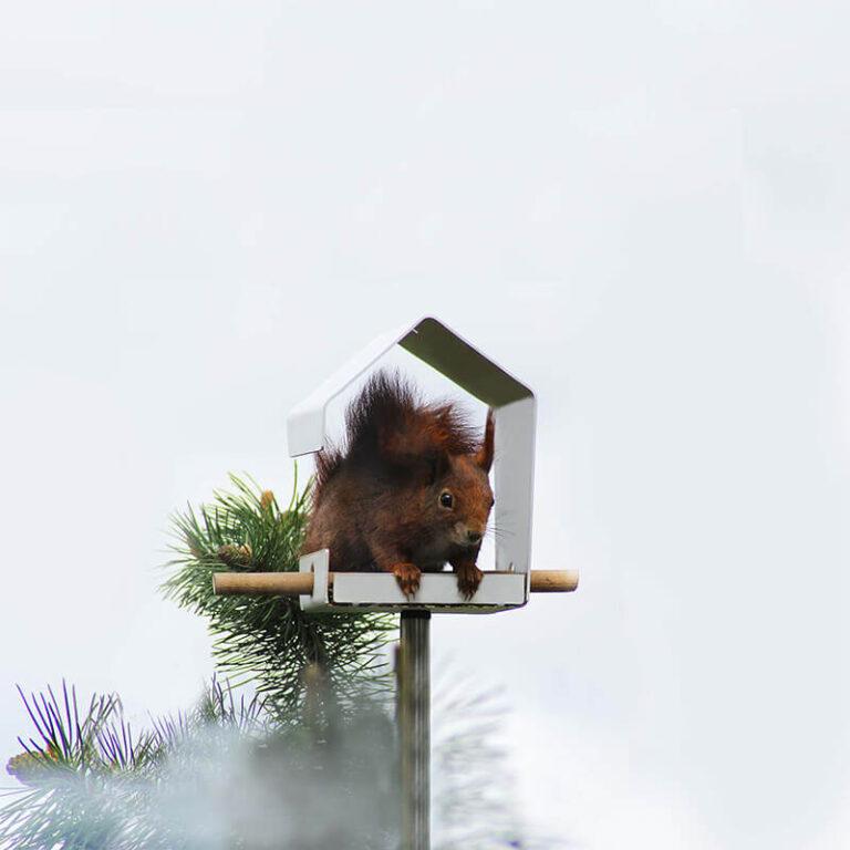 Al is het Petit vogelhuisje niet zo groot, toch kunnen eekhoorns er ook nog terecht. Gemaakt van metaal met een witte poedercoating.