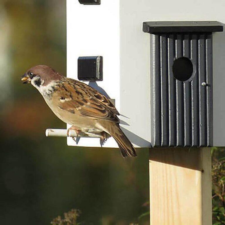 Bij de levering zitten 4 kleine ronde stokjes die je aan weerzijden waar de vogels kunnen eten, bevestigd. Twee aan elke kant. Hier kunnen de vogels op gaan zitten als ze willen eten of uitrusten. Het huisje heeft aan deze zijkant nog een balkon. Dit is puur als decoratie en niet functioneel.